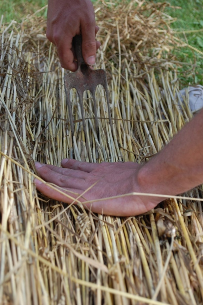 Combing the straw for skep-making